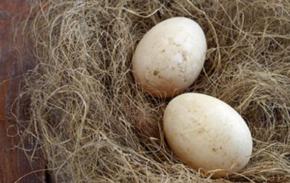 Duck's egg