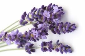 Lavender - picture no. 1