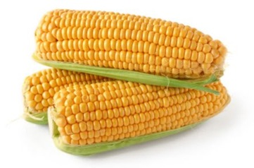 Corn - picture no. 1
