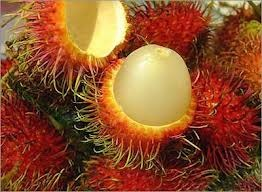 Rambutan - picture no. 1