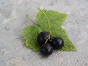 Currant - picture no. 2