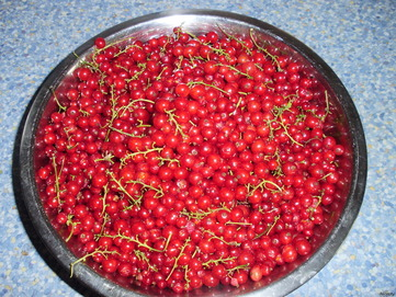 Currant - picture no. 3